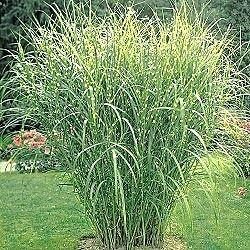 Plants for sale: Hardy Ferns, Ornamental Grasses,