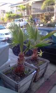 PLANTS - MOVING SALE (Oxnard - Silverstrand)