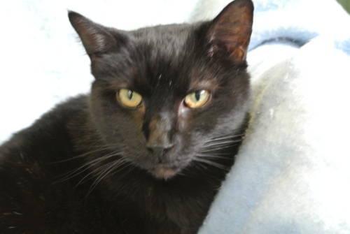 Polydactyl Kittens Indiana – Articleblog info