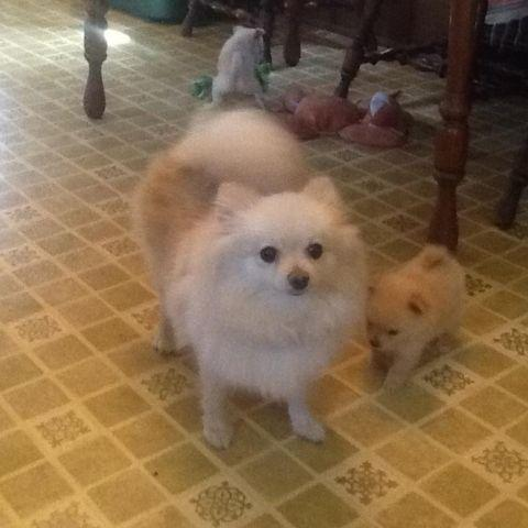 Potty Trained Dogs For Sale Mn