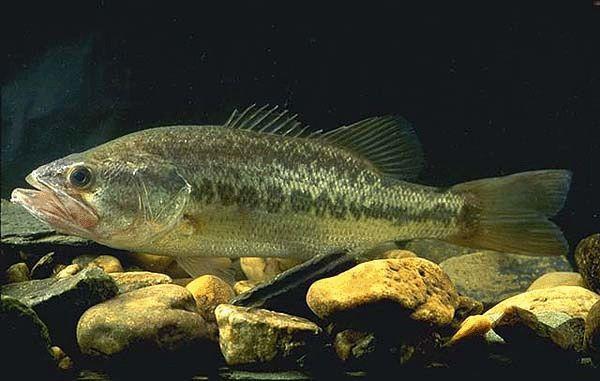 Pond Fish Altoona Pa For Sale In Altoona Pennsylvania Classified