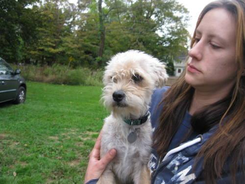Small Dog Adoptions In Ct