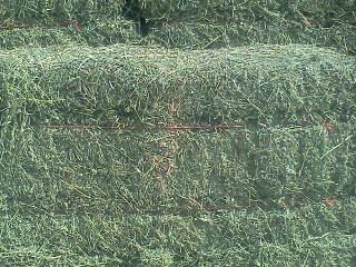 Premium Grass Alfalfa mix 75 lb bales - $12 (Parker)
