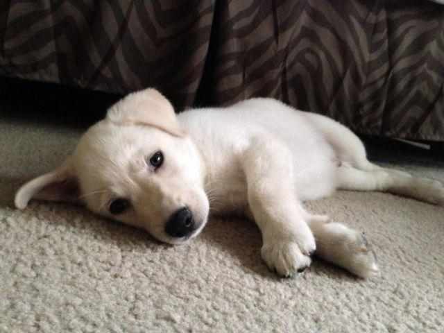 Pets And Animals For Sale In Lebanon Indiana Puppy And Kitten