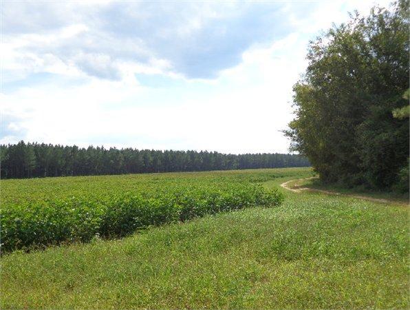 Putnam, AL Marengo Country Land 132.000000 acre