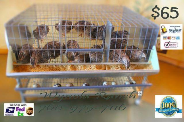 Quail Breeder Cages Or Quails Layer Community Pens For
