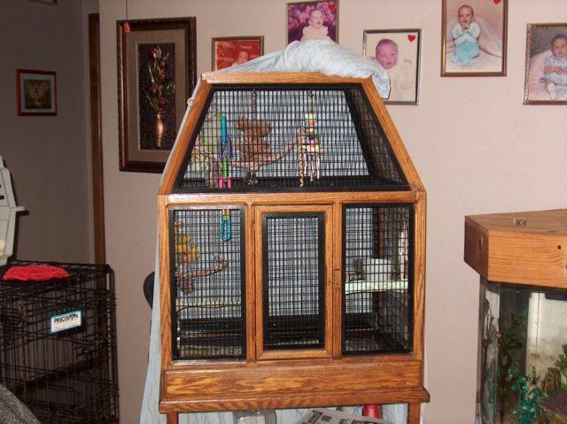 Hyacinth macaw parrots for sale colorado, colorado springs