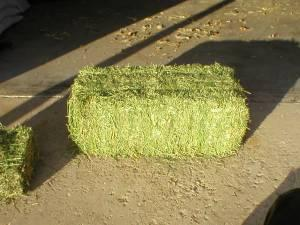 QUALITY ALFALFA HAY (DELIVERED)