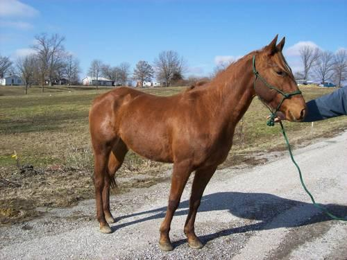 Paint Quarter Horses For Sale In Illinois
