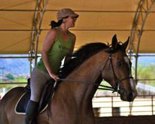Queen Creek Horse Training, Boarding, Farrier and