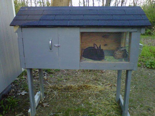 Rabbit Hutch And Two Rabbits Male And Female Front