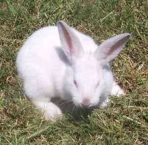 Rabbits/bunnies for sale - $20 (Katy)