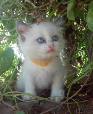 kitten umbilical cord