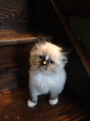cat fur matting