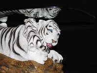 Gentil Rare White Tiger Coffee Table From Vegas