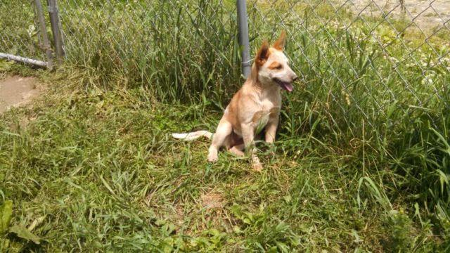 heeler for sale in Ohio Classifieds & Buy and Sell in Ohio - Americanlisted