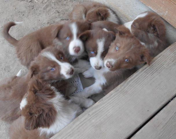 Pets And Animals For Sale In Foneswood Virginia Puppy And Kitten