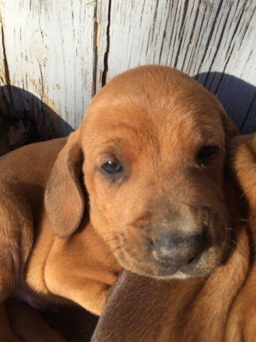 Pets And Animals For Sale In Himrod New York Puppy And Kitten