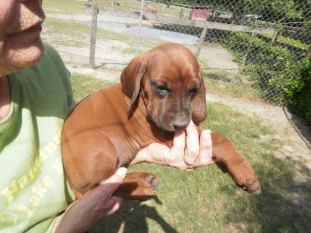 Pets And Animals For Sale In Bascom Florida Puppy And Kitten