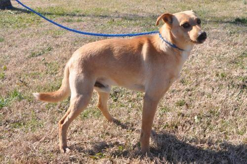 Retriever - Willie - Medium - Young - Male - Dog