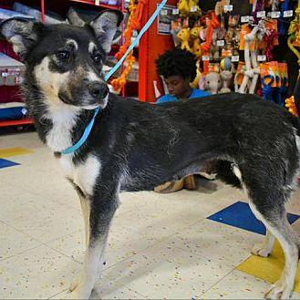 River adoption hold till 11 am Saturday Husky Adult