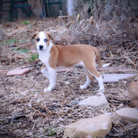 Pets And Animals For Sale In Baugh Oklahoma Puppy And Kitten