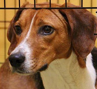 Savannah Foxhound Adult Female