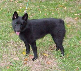 Small Dog Rescue Rochester Ny