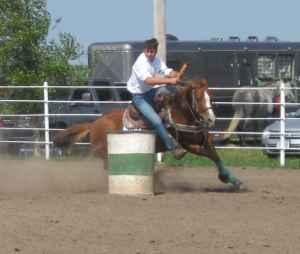 seasoned barrel and pole horse (Syracuse)