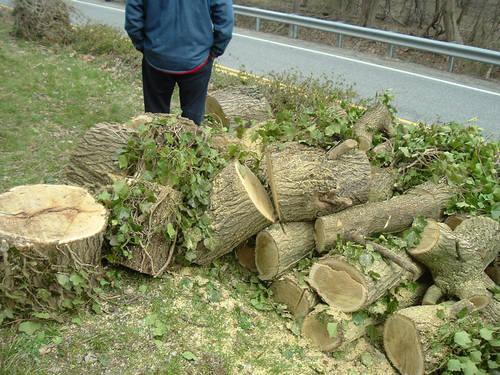 SEASONED MULBERRY TREE HARDWOOD FOR