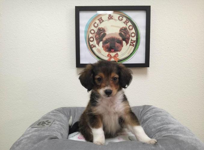 Shellion Shelillon Dog