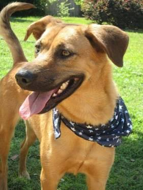 Shepherd - Penny - Large - Young - Female - Dog