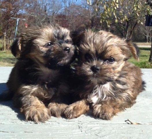 Pets And Animals For Sale In Oneida Tennessee Puppy And Kitten