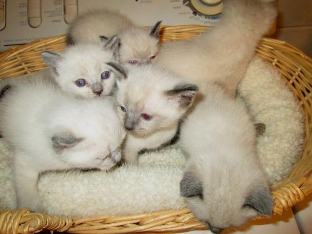 pets and animals for sale in honey brook pennsylvania puppy and