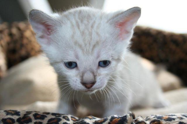 cat flutd treatment cost