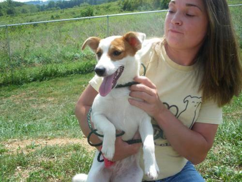 Spitz Pinky Small Young Female Dog For Sale In New Tazewell Tennessee Classified