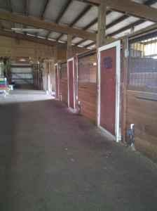 stalls for rent (Stable)