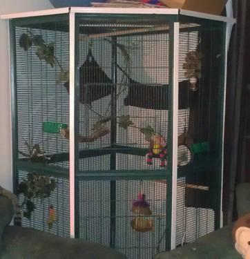 Sugar Gliders And Huge Cage For Sale In Dinwiddie