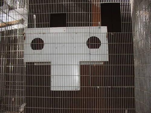 Suspended And Other Aviaries Of Heavy Gauge Wire Panels