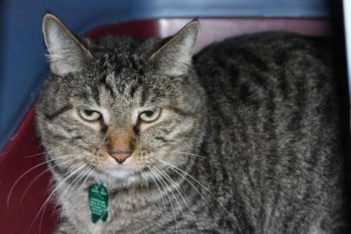 Arkansas Classifieds Pets Cats