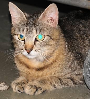 cat scratching carpet prevention