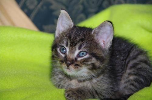 kitten tail signs