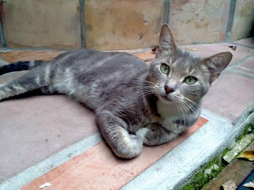 Tabby - Grey - Wicker - Medium - Young - Male - Cat