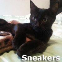 cat iphone 4 case