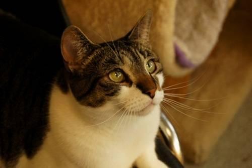 Orange tabby cat for sale philippines