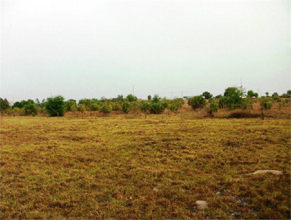 Tavares, SC Land 42.000000 acre