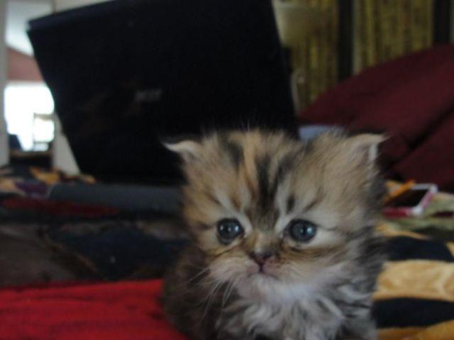 free cats salem oregon