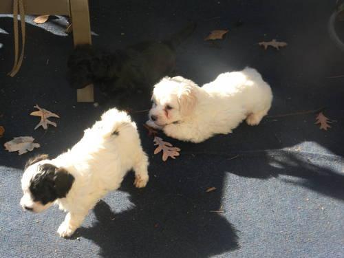 Trenton and teddy bare