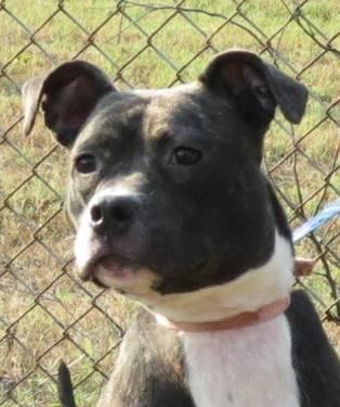 Terrier - Tasha - Medium - Young - Female - Dog