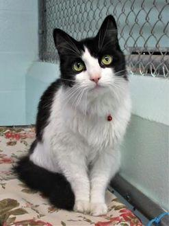 Thelma Domestic Longhair Senior Female